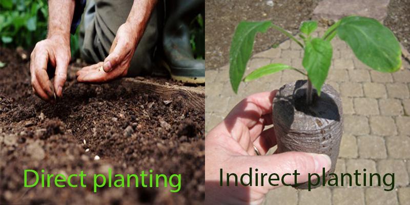 Overall planting methods around the world