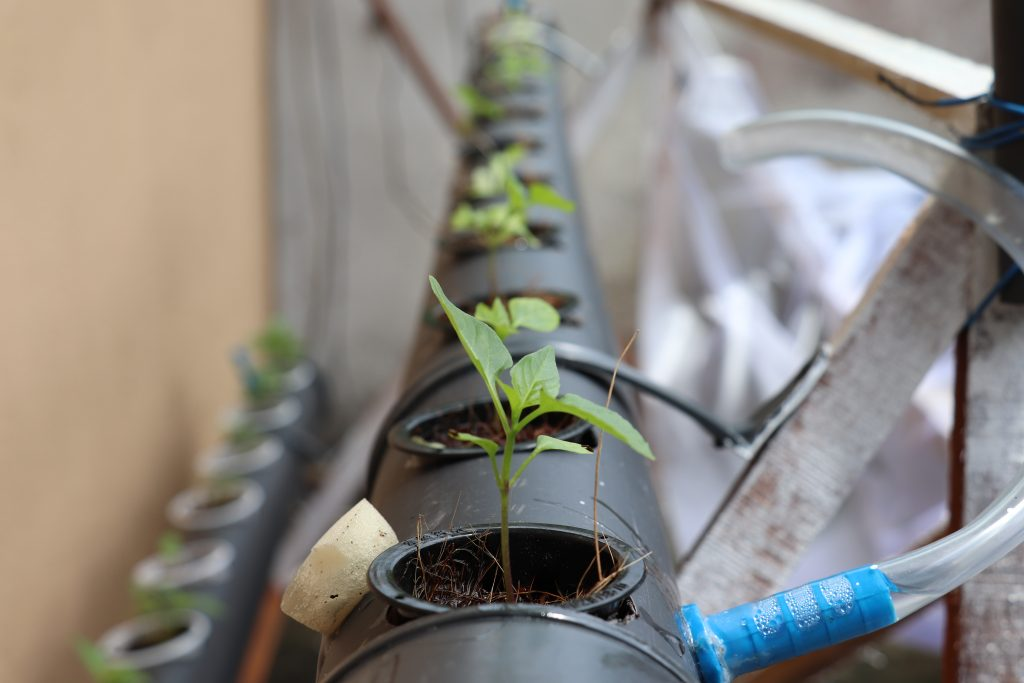 All about Hydroponics growing method