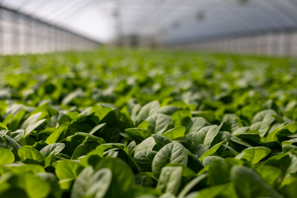 The engineering behind the greenhouses microclimate