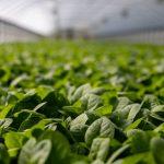 greenhouse-inside