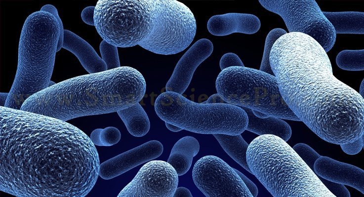 Use of Microorganisms as Bio Insecticide